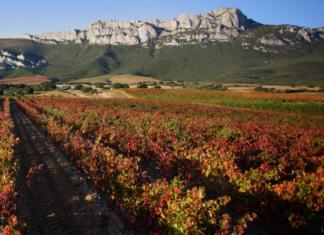 Rioja Alavesa Viñedos