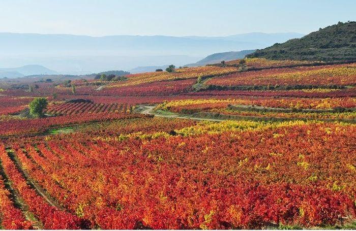 La Ruta del Vino por la Rioja Alavesa